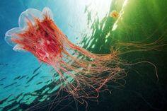 Underwater Photography: Alexander Semenov's Amazing Jellyfish Photos | Popular Photography Magazine