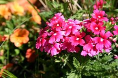 #Gartenkalender: Der Mai ist ein besonders wichtiger Gartenmonat. Nicht nur ist nach den Eisheiligen Pflanzzeit für frostempfindliche Blumen, Kräuter und Gemüse, auch im Obstgarten ist einiges zu beachten http://www.gartenmonat.de/html/gartenmonat_mai.htm