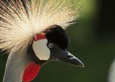 Centro Tutela Specie Minacciate | Parco Natura Viva