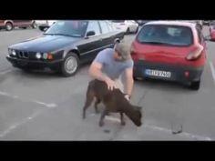 Emocionante cão reencontra dono || GFM - YouTube #salve #proteja #animais