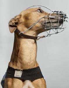 a caged dog