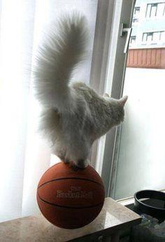 B-Ball Balance!