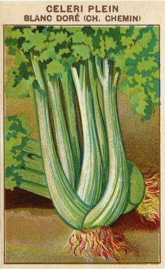Antique French Seed Pack Label Botanical Lithograph Celery Vegetable France