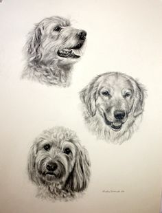Commissioned piece of 3 family dogs.