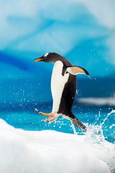 antarctica #monogramsvacation