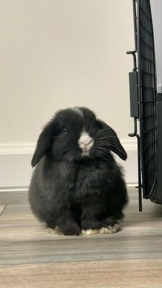 Cute Baby Bunnies, Baby Animals Super Cute, Cute Little Animals, Cute Funny Animals, Cute Cats, Cute Bunny Pictures, Cute Animal Videos, Cute Animal Pictures, Pet Bunny Rabbits