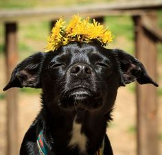 So what should I do with this flower on my head?
