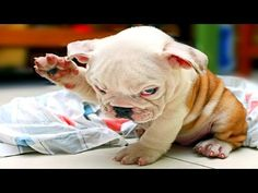 Things Dogs Teach Us - YouTube