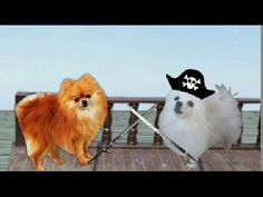 He protecc He attacc But most importantly. He gets his ship bacc Funny Dog Memes, Funny Dogs, Dankest Memes, Funny Shit, Doge Much Wow, Pirates Of The Caribbean, Cute Animals, Comics, Pets