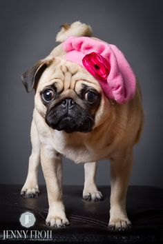 Oh why me???? The 30 Unhappiest Etsy Pug Models