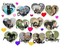 Tuesday's Tails #40: Valentine's Adoption Special at the Edmond Animal Shelter  These dogs have been at the shelter for way too long and need a home.  Please share.