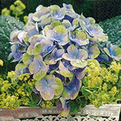 Romantic flowerage Paper Design, Succulents, Romantic, Plants, Dekoration, Romantic Things, Succulent Plants, Romance Movies, Planters