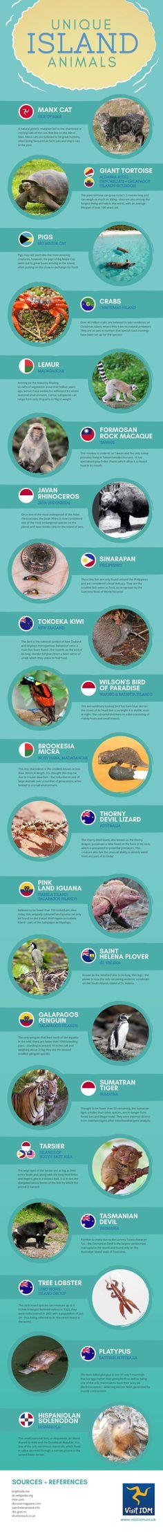 Unique Island Animals #Infographic #Animal