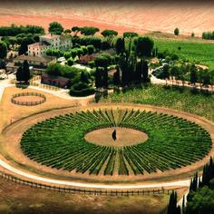 round vineyard