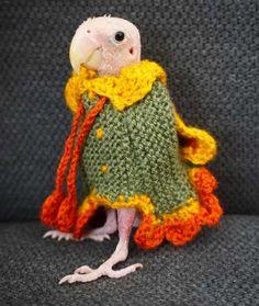 e2a373f11afb64 A bald lovebird in a green wool dress