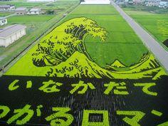 Rice Field Art! Very cool.