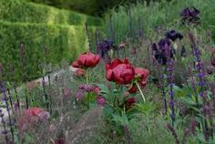 Image result for chelsea flower show laurent perrier garden 2009