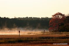 Mist rising from the marsh, Cape Cod