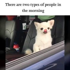 There are two types of people in the morning