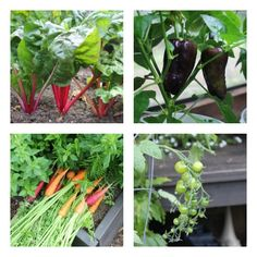 how to make my vegetable garden grow faster