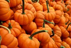 Learn how to help your body heal itself, and prevent inflammation processes with these natural anti-inflammatory foods! Best Pumpkin Patches, Pumpkin Spice Muffins, Pumpkin Picking, Sweet Home, Anti Inflammatory Recipes, Little Pumpkin, Healthy Living Tips, Pumpkin Recipes, Fall Recipes