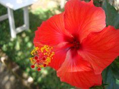 17 Meilleures Images Du Tableau Fleurs De Madagascar Madagascar