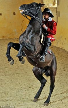 Equine ballet returns to England after 300 years with a school located at Bolsover Castle, Derbyshire