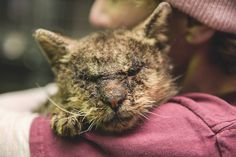 Woman hugs cat with mange-being treated-available for adoption