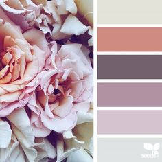 today's inspiration image for { flora tones } is by @_ewabakrac ... thank you, Ewa, for another breathtaking #SeedsColor image share!