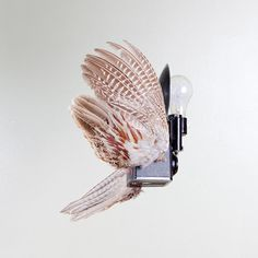 Birds of Aperture Combines the Worlds of Cameras and Taxidermy    Be sure to use pheasant lighting.