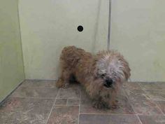 Manhattan Center   SPARKY - A1025646   MALE, TAN, SHIH TZU MIX, 4 yrs OWNER SUR - EVALUATE, NO HOLD Reason NEW BABY  Intake condition UNSPECIFIE Intake Date 01/16/2015, From NY 10468, DueOut Date 01/16/2015, I came in with Group/Litter #K15-001381 +++Came with  https://www.facebook.com/photo.php?fbid=945711942108352