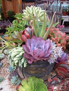 Succulent Gardening, California Style My recent trip to Southern California was pure heaven for the succulent enthusiast. From homes and businesses to garden shops and restaurants, gardening with succulents is just a way of life out here. Succulents In Containers, Cacti And Succulents, Container Plants, Planting Succulents, Container Gardening, Planting Flowers, Container Flowers, Potted Plants, Air Plants