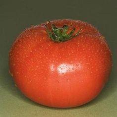 Graines de tomate New Yorker Qté 25 Fresh seeds 2018
