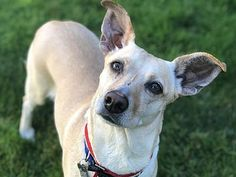 Portland, OR - Terrier (Unknown Type, Medium). Meet Bella a Dog for Adoption. Rescue Dogs, Animal Rescue, Doggies, Dogs And Puppies, Make You Cry, Portland, Shelter, Oregon, Dog Cat