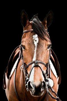 Horse PNG (my cutout)