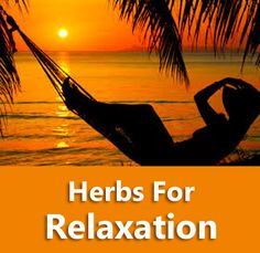 Learn what herbs can help you to relax