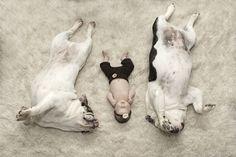 Newborn photography with dogs   English bulldog photography   Carol Ruth Photography