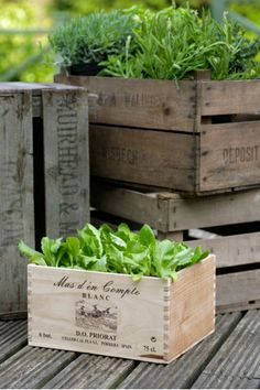 Would love to do this with a flower arrangement: Vintage Wine Crates | The Balcony Gardener