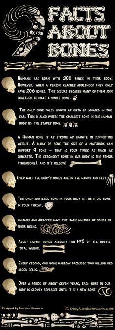 Bone Facts Infographic