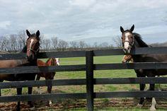Horse farms in Lexington, Kentucky