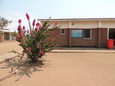 New plant life for the Nandumbo Health Centre #Malawi #HELPchildren #HealthCentre