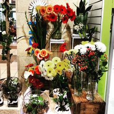 Hanging Basket Florist Blog | Florist in Rockingham WA