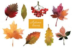 @newkoko2020 Watercolor autumn leaves by lenlis on @creativemarket