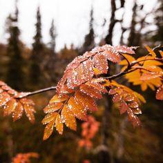 "seasonalwonderment: "" First Frost """