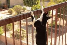 Altered Cats!: The Cats Enjoying Their New Balcony Pet Enclosure
