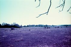 This photo is taken in the Czech Republic with a Minolta XG2 camera. Film: Purple chrome of the brand Lomography, 35 mm. August, 2013.