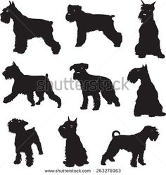 outline schnauzer - Google Search