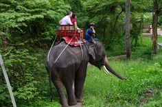 タイで象に乗る Bangkok, Thailand, Horses, Travel, Animals, Viajes, Animaux, Traveling, Horse