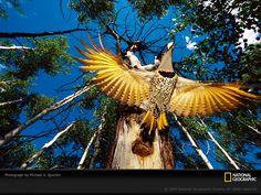 101164,xcitefun yellow bird quinton 760198 sw Life in   YELLOW image gallery gallery