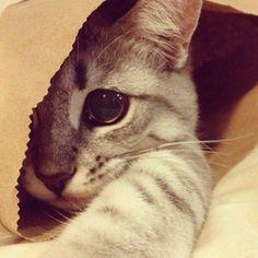 #Cats #Cat #Kittens #Kitten #Kitty #Pets #Pet #Meow #Moe #CuteCats #CuteCat #CuteKittens #CuteKitten #MeowMoe Sleeping in a bag, why not? ... http://www.meowmoe.com/48918/